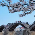 桜の季節。錦川清流線と錦帯橋の休日。