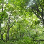 山登りの視点も、構造材としての視点も、格段にひろがりました!「樹木たちの知られざる生活」