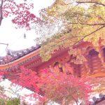 三滝寺の紅葉。みごろはもう少しだな。